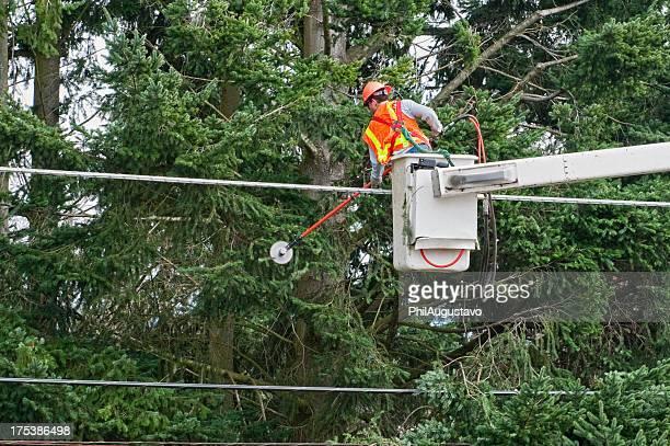 Trabajador para cortar ramas de árbol de líneas de potencia