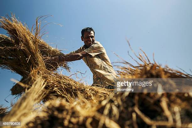 A worker unloads bundles of grass bales from a bullock cart in Kainad Maharashtra India on Saturday Dec 21 2013 The construction of 600000 kilometers...