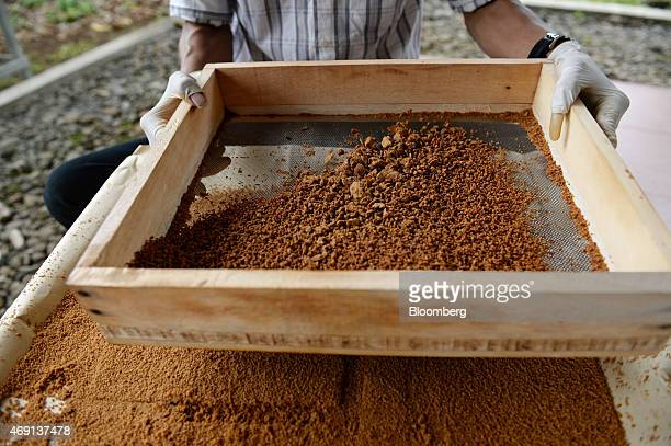 A worker uses a sifter to sieve coconut palm sugar at the PT Bio Takara factory in Purwokerto Central Java Indonesia on Wednesday March 11 2015...