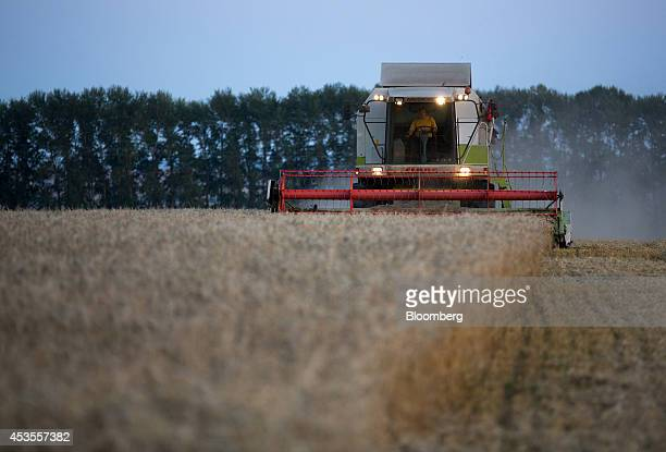 A worker uses lights on a Claas KGaA combine harvester to illuminate wheat crops during the summer harvest at dusk on the OOO Barmino farm enterprise...