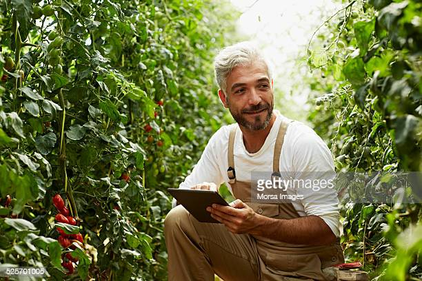 Worker using digital tablet in greenhouse