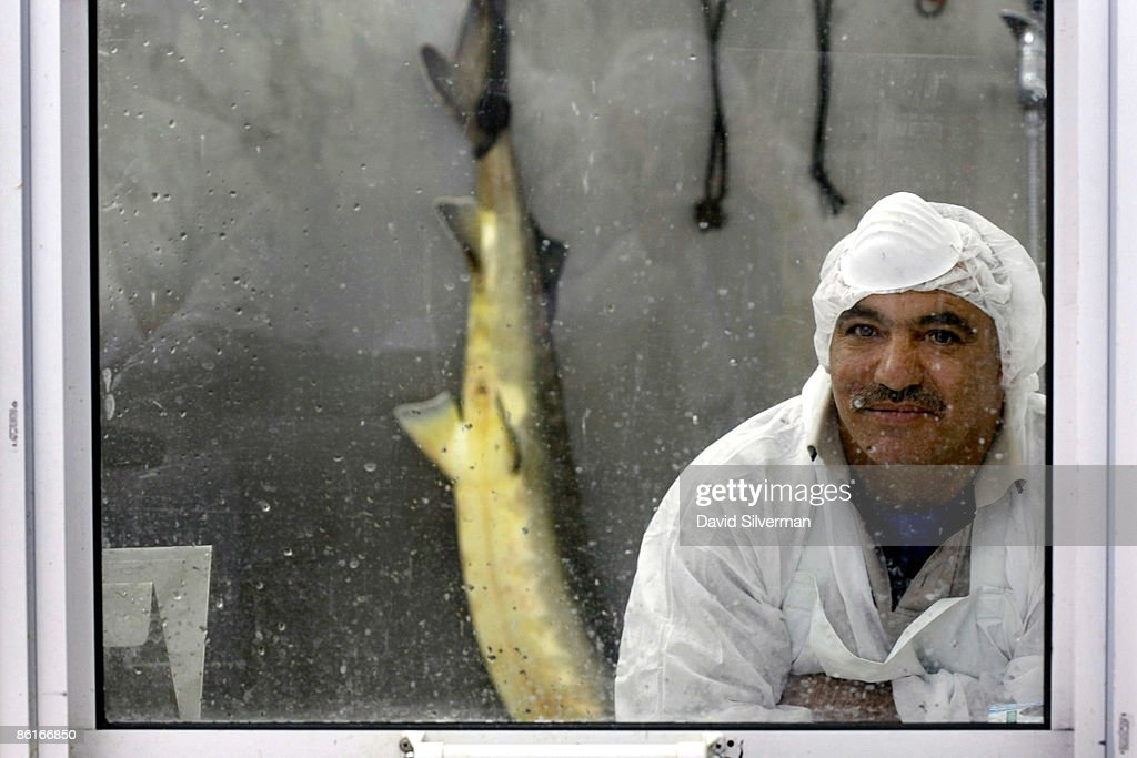A worker waits for the go-ahead from staff in a sterile room to harvest eggs from a just-slaughtered sturgeon at the Galilee Caviar's processing plant on April 22, 2009 in Kibbutz Dan, Israel. Far from the Caspian Sea, where over fishing and pollution have slashed yields of this prized delicacy, fish farmers at this kibbutz are reaping the rewards of years of harvesting and are cashing in on the global shortage of caviar. After retail prices for caviar soared to as much as US$5,000 a kilogram, the kibbutz turned from rearing the fish from imported Russian Osetra stock for its meat to breeding and growing them in special ponds for as long as ten years to harvest their roe. According to Yigal Ben Tzvi, the Managing Director of caviar at Galilee, his caviar is lauded by connoisseurs and orders coming from Japan, America, Europe and even Russia account for their annual production of some 2,000 kilograms.