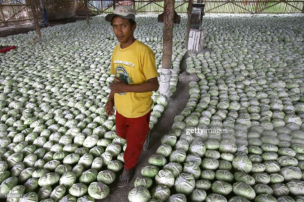 A worker walks in a market warehouse in Malang in East Java province full of freshly harvested cabbages for export to neighboring Association of Southeast Asian Nations (ASEAN) countries Malaysia and Brunei on December 12, 2012. ASEAN secretary-general Surin Pitsuwan said during their meetings in November in Cambodia that the 10-member countries of ASEAN were moving closer to consolidate trade that would further cement a shift in global economic power from the West towards Asia.