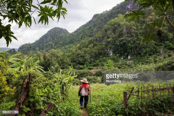 A worker walks through a lychee orchard in the Chai Prakan district of Chiang Mai province Thailand on Saturday May 27 2017 Thailand's economic...