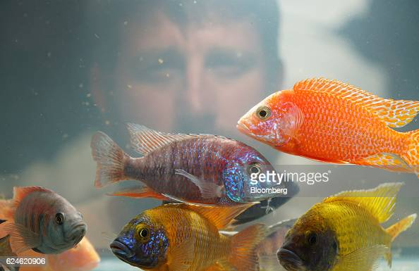 Operations inside the imperial tropicals freshwater fish for Florida tropical fish farms