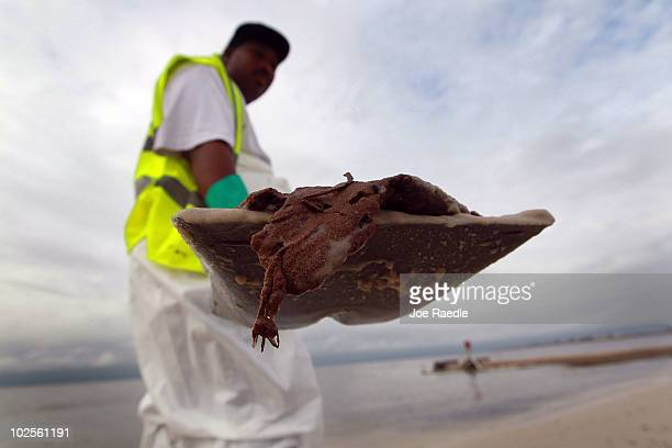 A worker wears protective gear as he uses a shovel to carry an oil glob that he was removing from the beach after it washed ashore from the Deepwater...