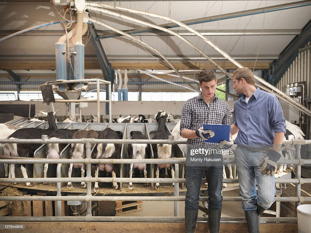 Workers at milking station on farm : Stock Photo