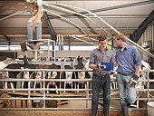 Workers at milking station on farm