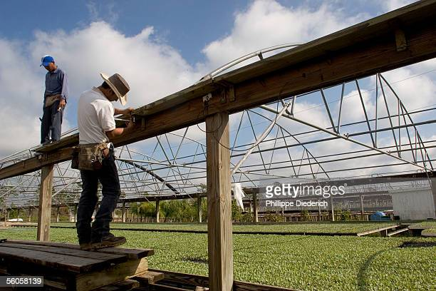 Workers at the nursery Johnson Plants Inc repair clips that hold plastic covers and side curtains that protect the young vegetable plants from rain...