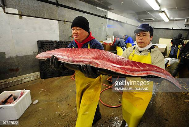 Workers carry a bluefin tuna's belly before dividing it into pieces in order to provide it to New York's top sushi restaurants at a fish market in...
