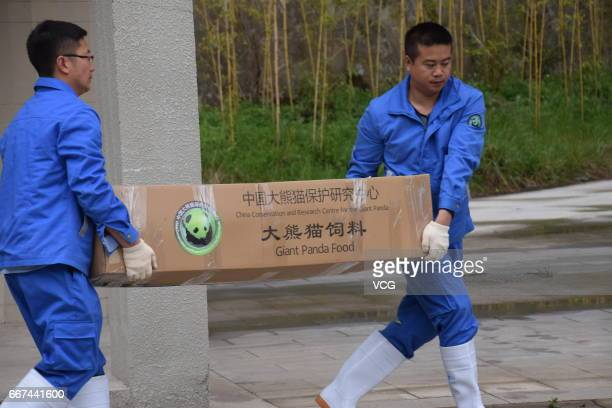 Workers carry a box of food for giant pandas Xing Ya and Wu Wen who will leave for Netherlands on April 11 2017 in Ngawa Tibetan and Qiang Autonomous...