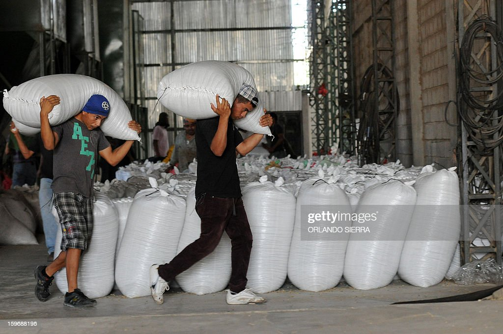 Workers carry coffee beans sacks, in the department El Paraiso, 110 kms east of Tegucigalpa, on Januray 17, 2013. Central America, one of main producers of the best Arabica Coffee, is analyzing to take measures to combat the Roya (Puccinia graminis) blight already threatening more than one third of the grain crop, one of the region's major export items. AFP PHOTO/Orlando SIERRA