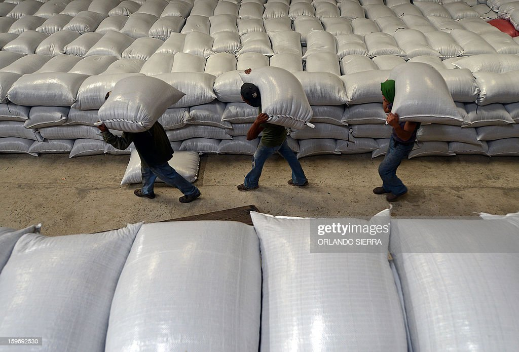 Workers carry sacks of coffee beans, in the department El Paraiso, 110 kms east of Tegucigalpa, on Januray 17, 2013. Central America, one of main producers of the best Arabica Coffee, is analyzing to take measures to combat the plague already threatening more than one third of the bean crop, one of the region's major export item. AFP PHOTO/Orlando SIERRA