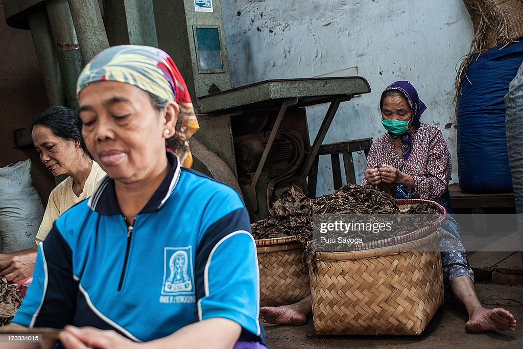 Workers clean chopped tobacco leaves at Rizona Baru cigar factory on July 12, 2013 in Temanggung, central Java, Indonesia. Rizona Baru cigar factory was builth on 1910 by Oo Tjong Han a chinese immigrant who live in Temanggung. Everyday the factory could produce 3000 cigars which are manually crafted by the skilled hands of the workers, who are mostly women.