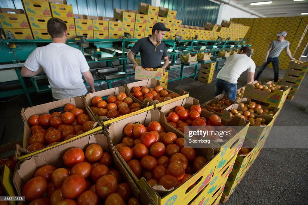 Workers collect boxes of freshly picked tomatoes from a sorting machine in the boxing room at the Yuzhny Agricultural Complex, operated by AFK Sistema, in Ust-Dzheguta, Russia, on Wednesday, May 18, 2016. The plump hybrid tomatoes, named for the fearsome tank that helped trounce Hitler, are the pride of the Yuzhny Agricultural Complex, a mass of greenhouses the size of 2,300 football fields between the Black and Caspian seas. Photographer: Andrey Rudakov/Bloomberg via Getty Images