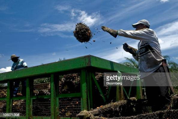 Workers collect the fruit from oil palm trees on a plantation for transport to a production facility in Cumaral Colombia on Friday Oct 1 2010 Palm...
