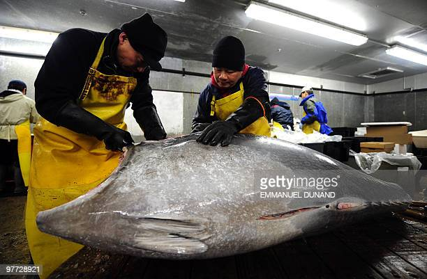 Workers cut a bluefin tuna into pieces in order to provide it to New York's top sushi restaurants at a fish market in Jersey City New Jersey March 12...