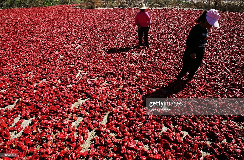 Workers dry chillis in the desert sun on September 10, 2007 in Aksu of Xinjiang Uygur Autonomous Region, China. Xinjiang has been noted in ancient times along the old silk road as a political and commercial centre. It is the hub of an important commercial region, bordering Russia, Afghanistan, Kazakhstan, Tajikistan, Kyrgyzstan and Uzbekistan with Pakistan to its south.