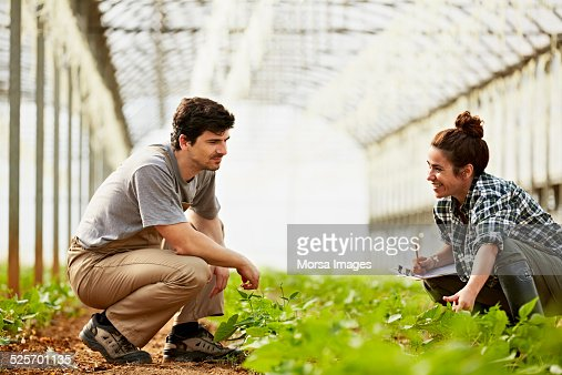 Workers examining plants in greenhouse