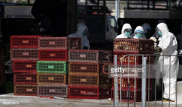 Workers handle crates containing live chickens before they are culled in Hong Kong on December 31 after the deadly H7N9 virus was discovered in...