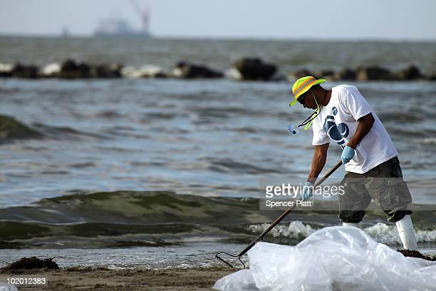 Workers hired by BP to help clean the beaches of oil work in a contaminated area on June 12 2010 in Grand Isle Louisiana US government scientists...