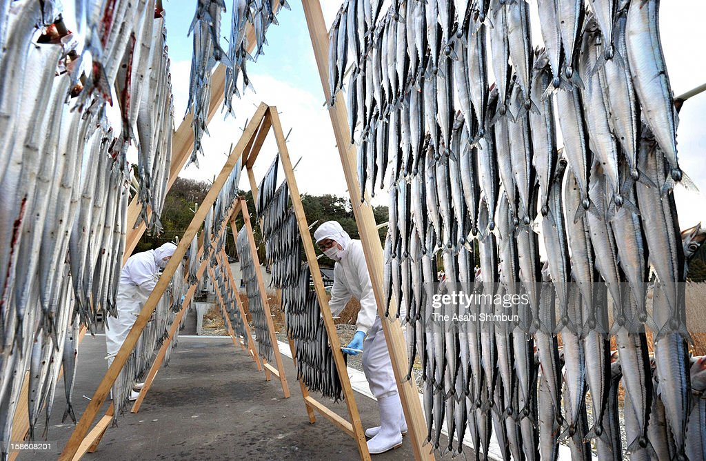 Workers hung saury for the first time since the tsunami washed away their factory, on December 20, 2012 in Onagawa, Miyagi, Japan. 30,000 dried saury used to be produced at its peak before the earthquake and tsunami, but only 2,000 saury were hung.