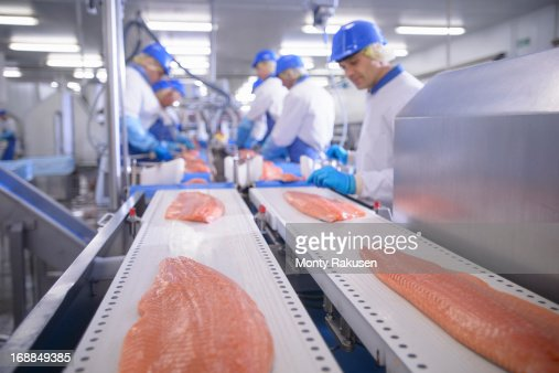 Workers in food factory preparing salmon fillets