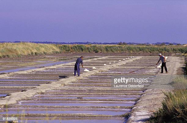 Workers in salt pools, Charentes, France