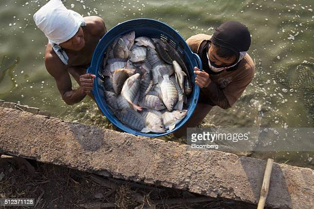Workers lift a basket of caught fish from a pond at a fish farm in Kengtung Myanmar on Friday Feb 19 2016 Though Aung San Suu Kyi will hold a seat in...