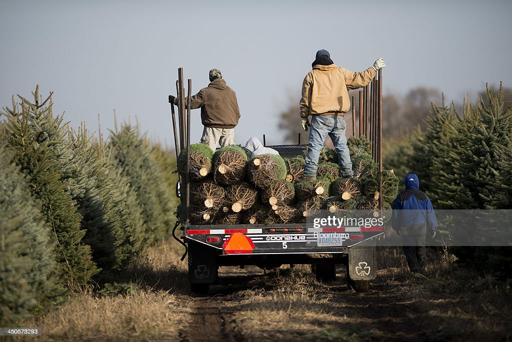 Workers load a trailer with freshly cut Christmas trees at Mathisen Tree Farms in Greenville, Michigan, U.S., on Thursday, Nov. 14, 2013. With U.S. economic growth trailing the Federal Reserve's projections, shoppers have plenty of reasons to hoard their dollars this holiday season. Photographer: Ty Wright/Bloomberg via Getty Images