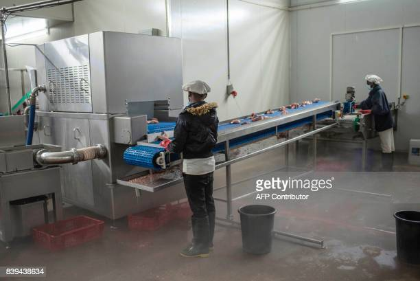 Workers monitor chicken pieces being washed in the Valentine Chicken Abattoir on July 11 2017 Farming in Nigeria is not for the fainthearted...
