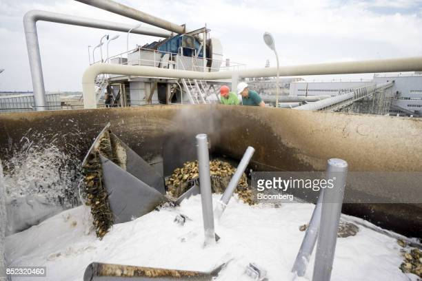 Workers monitor sugar beets as they move through a washing process at the EDF Man Ltd refinery in Nikolaev Ukraine on Friday Sept 22 2017 More...