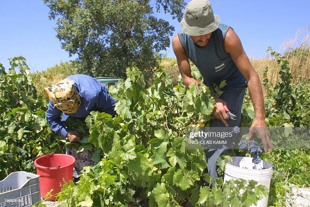 Wine making in Omodos, Troodos Mountains, Cyprus