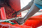 Workers of the Mubuyu Farm Zambia use a coffee pulper to remove red skin from coffee beans The pulp is composted and used as an ecological fertilizer...