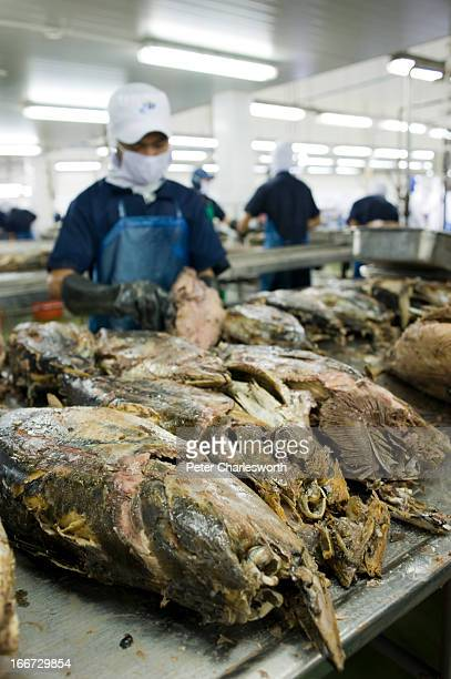 Workers on the food processing lines at the Thai Union Frozen Products Plc one of the world's largest processors of canned seafood Here they are...