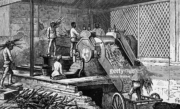Workers operating a sugar cane crushing machine on a plantation in Jamaica 1884 Original publication The Graphic pub 22nd November 1884