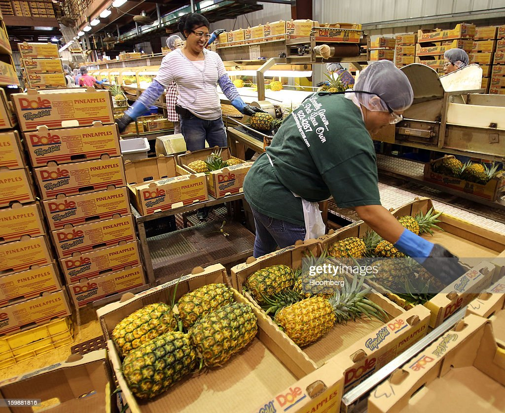 Workers pack whole pineapples for shipment at the Dole Food Company Inc. plantation in Wahiawa, Hawaii, U.S., on Thursday, Jan. 17, 2013. Dole Food Company Inc. has evolved from a Hawaiian pineapple purveyor into the world's largest producer of fresh fruit and vegetables. Photographer: Tim Rue/Bloomberg via Getty Images