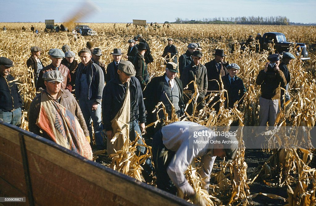 Workers pick ears of corn during corn harvest time. (Photo by Ivan Dmitri/Michael Ochs Archives/Getty Images