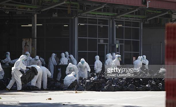 Workers pile bags of dead chickens after they were culled in Hong Kong on December 31 after the deadly H7N9 virus was discovered in poultry imported...