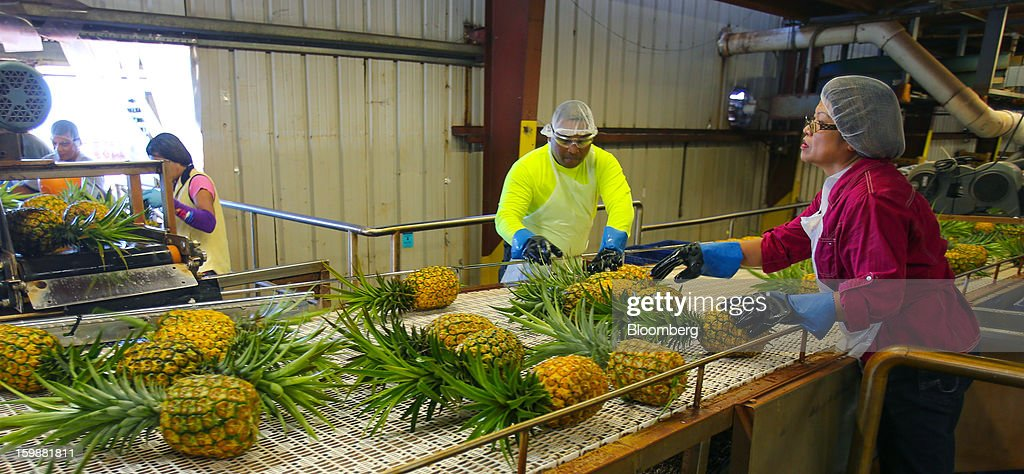 Workers place freshly picked and washed pineapples onto a conveyor belt at the processing plant at the Dole Food Company Inc. plantation in Wahiawa, Hawaii, U.S., on Thursday, Jan. 17, 2013. Dole Food Company Inc. has evolved from a Hawaiian pineapple purveyor into the world's largest producer of fresh fruit and vegetables. Photographer: Tim Rue/Bloomberg via Getty Images