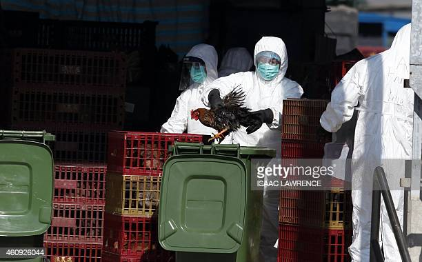 A workers places a chicken in a bin during a cull in Hong Kong on December 31 after the deadly H7N9 virus was discovered in poultry imported from...