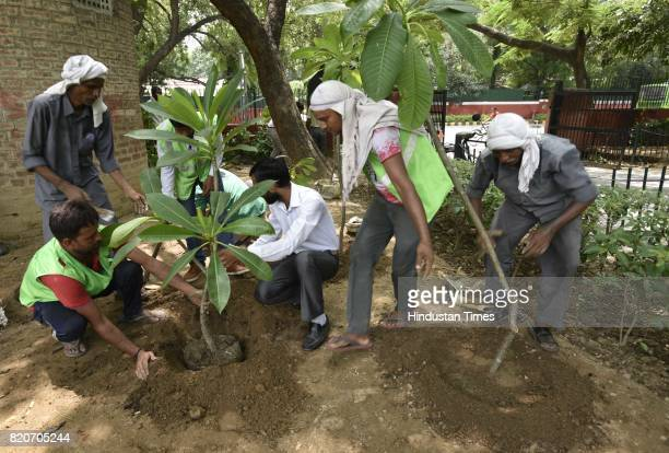 NDMC workers plant a sapling at Ravinder Nagar on July 22 2017 in New Delhi India The New Delhi Municipal Council roped in school children and kicked...