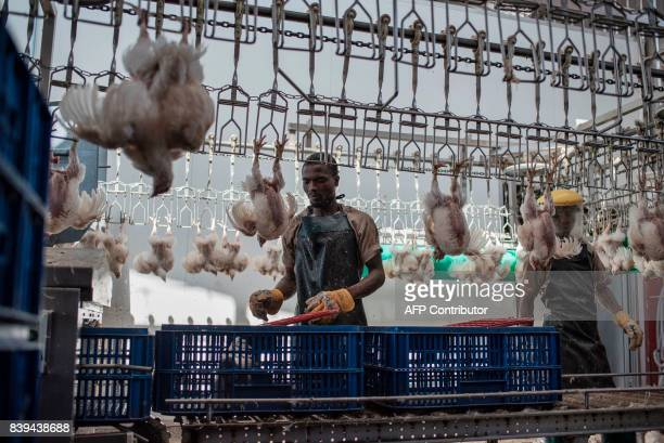 Workers prepare chickens to be slaughtered at the Valentine Chicken Abattoir on July 11 2017 Farming in Nigeria is not for the fainthearted...