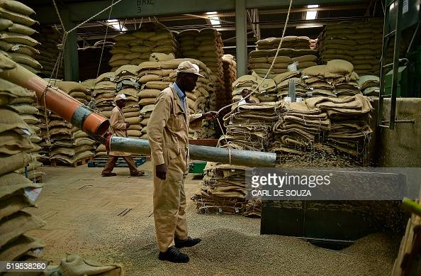 Workers prepare green unroasted coffee beans for roasting at Dormans coffee factory in Nairobi on April 6 2016 Dormans has been roasting coffee since...