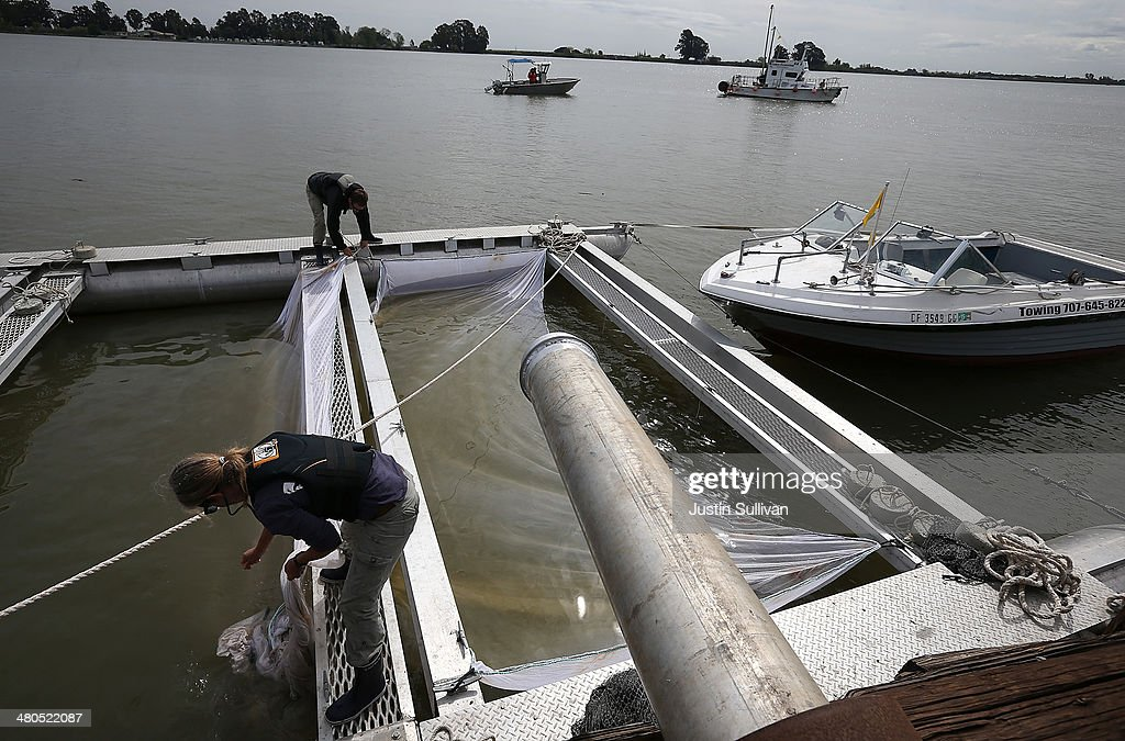 Low levels in sacramento river due to drought force for Coleman fish hatchery