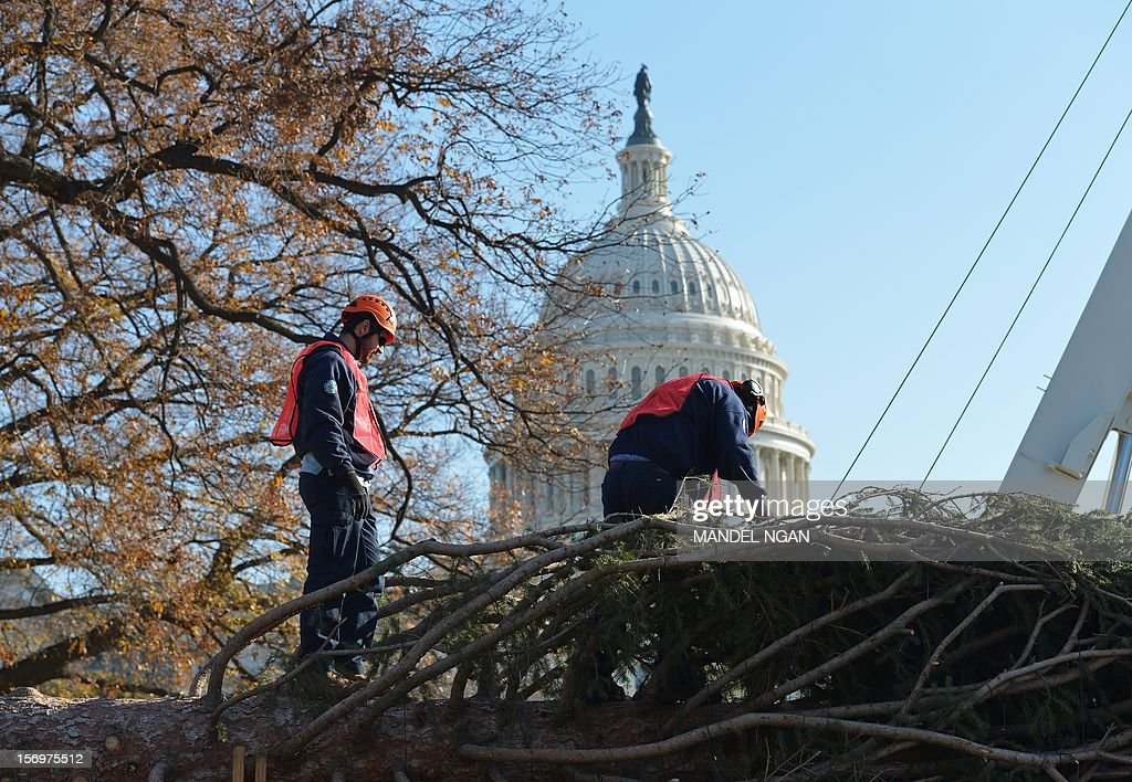 Workers prepare the Capitol Christmas tree on the back of a truck so it to be hoisted by a crane into position on the West Lawn of the US Capitol on November 26, 2012 in Washington. The 65-foot tree is from the White River National Forest in Colorado. AFP PHOTO/Mandel NGAN