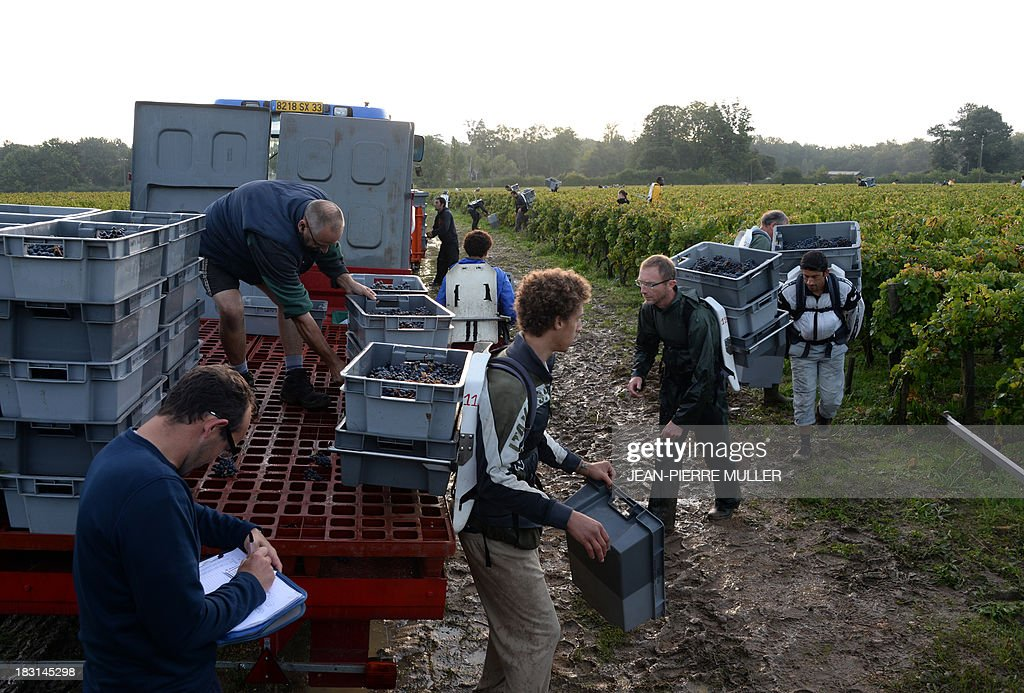 Workers prepare to load a lorry with crates filled with grapes during the harvest in a 'Graves' grand cru parcel, on October 5, 2013, in Martillac (Bordeaux area). France is facing one of its poorest wine grape harvests in four decades, due to a cold and rainy spring and severe summer and autumn hail storms. 'Grand cru' is one of the highest classification for French wines.