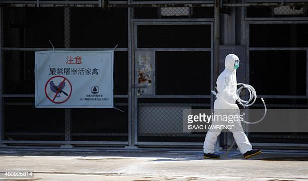 A workers prepare to take part in a chicken cull in Hong Kong on December 31 after the deadly H7N9 virus was discovered in poultry imported from...