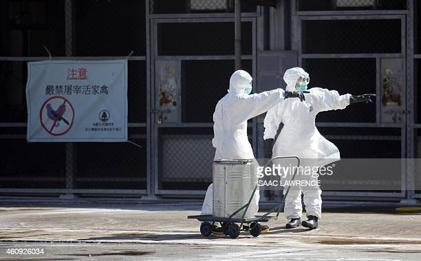Workers prepare to take part in a chicken cull in Hong Kong on December 31 after the deadly H7N9 virus was discovered in poultry imported from China...