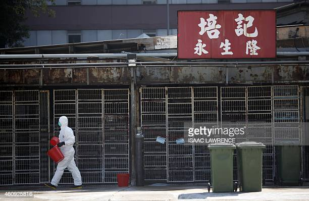 A workers prepares bins during a chicken cull in Hong Kong on December 31 after the deadly H7N9 virus was discovered in poultry imported from China...